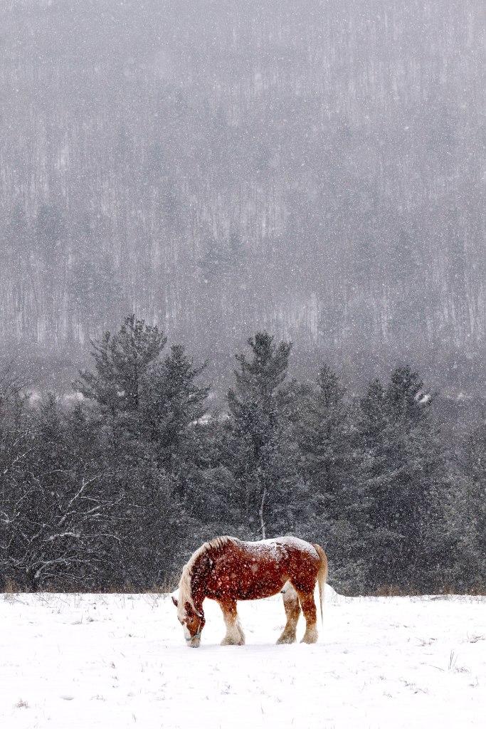 jan-21-snow-04_web