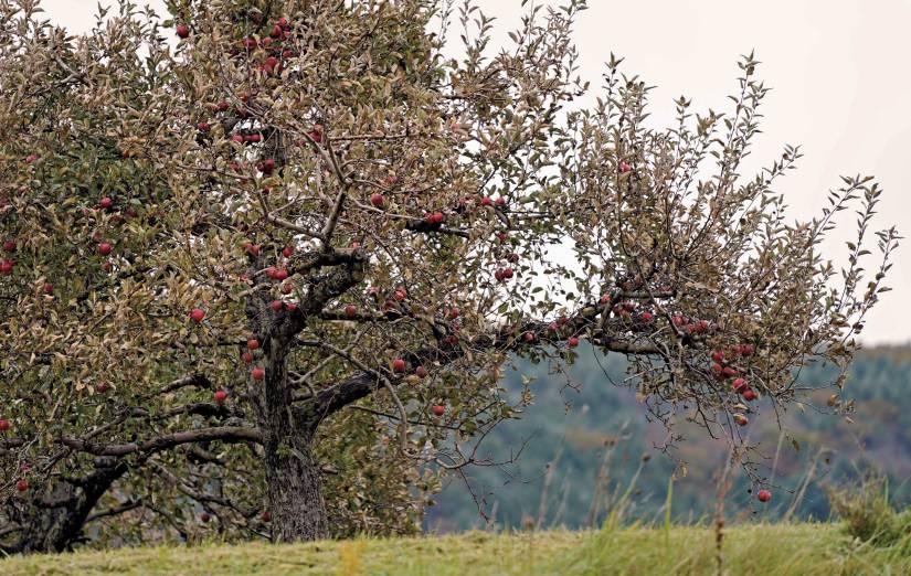 Bartlett's Apple Orchard