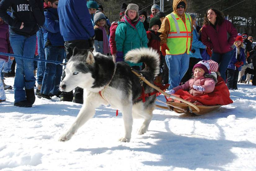 Miko tows children for a sled ride during the Brattleboro Winter Carnival at Living Memorial Park.